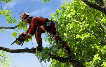 find trusted rated Carmarthenshire tree surgeons