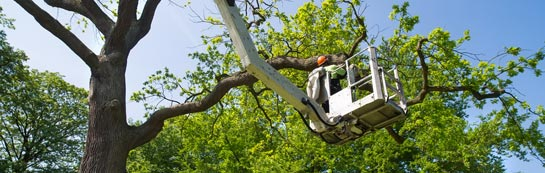 Carmarthenshire tree surgery services