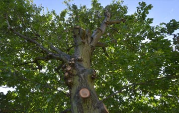 what is Carmarthenshire tree surgery?
